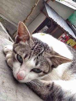 Kucing melek copy