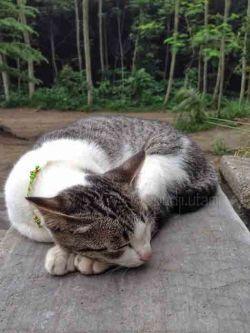 Kucing tidur copy